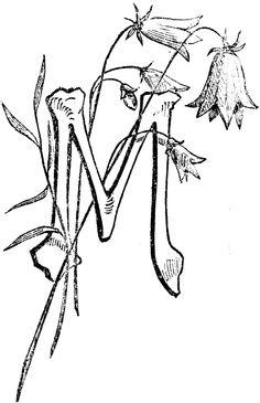 1866 decorative letter m
