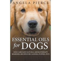 Essential Oils for Dogs : Dog Care Safe Natural Aromatherapy Remedies, Recipes for Canines, Puppies, Pets Essential Oils Dogs, Thieves Essential Oil, Spynx Kitten, Leonburger Dog, Dog Upset Stomach, Smelly Dog, Oils For Dogs, Pet Grooming, Natural Medicine