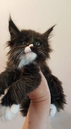 Cutest Kittie I've ever seen