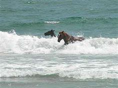 Wild Horses @ Corolla, NC Outer Banks