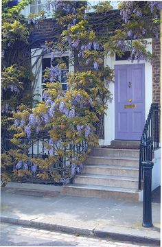 This is gorgeous. Everything from the wisteria vine to the lavender front door. for the true addict! Purple Front Doors, Purple Door, Front Door Colors, Entrance Doors, Doorway, House Front, House Painting, Windows And Doors, Porches