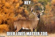 deer meme - Yahoo Image Search Results