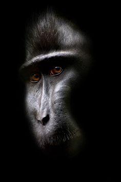 the mask by Syahrul Ramadan, via 500px
