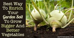 Best Way To Enrich Your Garden Soil To Grow Bigger And Better Vegetables►►http://off-grid.info/blog/best-way-to-enrich-your-garden-soil-to-grow-bigger-better-vegetables/?i=p