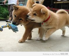 cutest puppies ever~!!!!