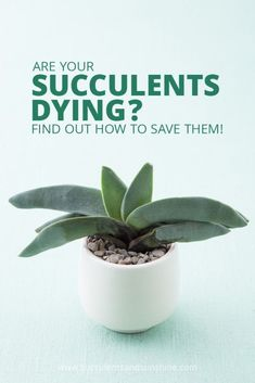 This post is so helpful for diagnosing why your succulent is dying! …
