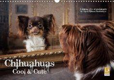 Chihuahuas - Cool & Cute - CALVENDO Kalender von Oliver Pinkoss - #kalender #calvendo #calvendogold #hundekalender #hunde #hundebilder #fotografie