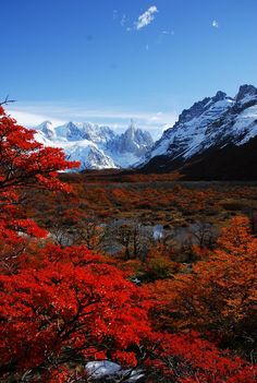 The world's a beautiful place✯ Cerro Torre and autumn leaves, Parque Nacional Los Glaciers, Patagonia, Argentina Places Around The World, The Places Youll Go, Places To Go, Around The Worlds, Beautiful World, Beautiful Places, Beautiful Pictures, Amazing Places, Landscape Photography