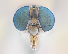 Video chat about this cuddly Robberfly by Johan J.Ingles-Le Nobel at https://createamixer.com/