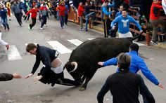 Benjamin Miller, 20, from Georgia, in the US, is gored by a bull during the 'Carnaval del Toro' in Ciudad Rodrigo, Spain. An American youth is recovering in the intensive-care unit of a hospital in western Salamanca after being savagely gored during a bullfighting festival celebrating Carnival, officials said Sunday. Surgeon Enrique Crespo said he was called to operate on 20-year-old Benjamin Miller from Georgia, who had been gored and tossed by a large fighting bull on Saturday, the first…