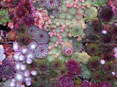 So beautiful, it almost looks like a bed of coral under the sea.