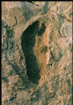 Oudste menselijke voetafdruk (3,7 miljoen jaar oud), National Museum Dar es Salaam