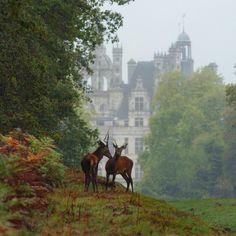 Château Chambord en automne