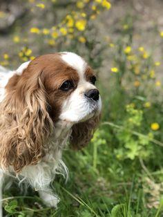 Roosa Dogs, Animals, Animales, Animaux, Animal Memes, Animal, Pet Dogs, Dog, Animais