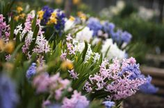Floralia: The Roman May Day Celebration: Spring flowers were celebrated during the Floralia festival of ancient Rome.