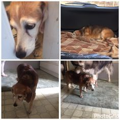 Bilie-Jean DaigleCT Lost Pets 4 hrs near Bristol ·   My friends just caught this dog on Rte 6 near Chunky Tomato. She's an older beagle (mix) dog. She has a few bumps & lumps & chowed down 2 cups of food. They said she had frozen tears on her face 😢  Pls call if you are missing your dog or know where she lives 860.681.2312