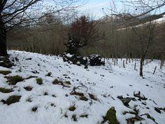 https://flic.kr/p/EPZw6s | Nieve sin huellas en el monte Santa Bárbara de Gorriti (Navarra).
