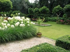 Hydrangeas with grasses Patio Garden, Minimalist Garden, Garden Trees, Cottage Garden, Grasses Landscaping, Landscape Ideas Front Yard Curb Appeal, Hydrangea Garden, Outdoor Gardens, Beautiful Gardens