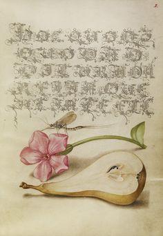 Mira-calligraphiae-monumenta-18
