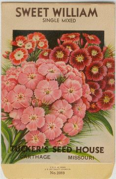 Seed Art | Antique Seed Packet Art