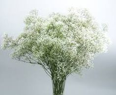 Baby's breath- a classic filler flower for weddings