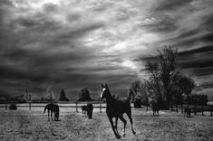 Black and White Landscape Photography    http://images.fineartamerica.com/images-medium-large/horses-running-black-white-surreal-nature-landscape-kathy-fornal.jpg