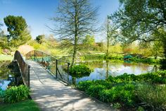 RHS Garden Hyde Hall - The Lower Pond in spring.