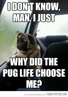 Introspective Pug Questions His Existence…