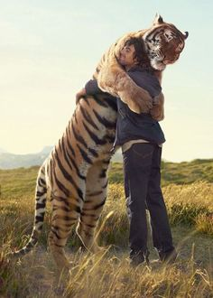 Notice the tiger's eyes are closed. and such a peaceful and whole response to being loved.