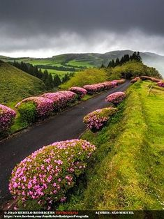 The way through the forest reserve of Pinhal da Paz, Sao Miguel Island in Portugal Azores Portugal, Spain And Portugal, Portugal Travel, Eckhart Tolle Meditation, Places Around The World, Around The Worlds, Wonderful Places, Beautiful Places, Landscape Photography