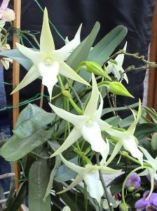 Orchids Garden, Orchid Plants, Orchid Cactus, Low Maintenance Garden Design, Types Of Orchids, Growing Orchids, Star Of Bethlehem, Moon Garden, Orchid Care