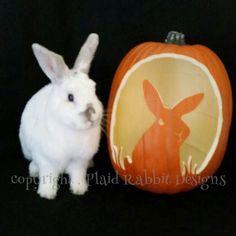 Rabbit Ramblings: Bun o' lanterns -- Bunny pumpkins for Halloween Rabbit Halloween, Halloween Post, Halloween Projects, Halloween Pumpkins, Halloween Decorations, Halloween 2017, Bunny Art, Cute Bunny, Pumpkin Carving Party