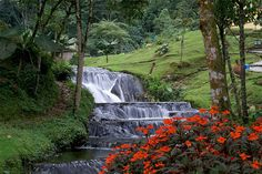 Manizales. Aguas termales Places Ive Been, Places To Visit, Colombia South America, Colombia Travel, The Good Place, Waterfall, Paradise, Country, Outdoor Decor