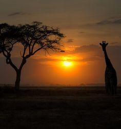 jmtravel-serengeti