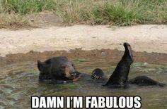 MEME - Fabulous Bear
