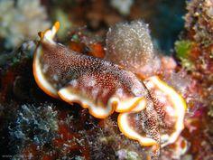 Phenomenal flatworms. Ah, Platyhelminthes.