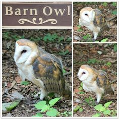 JBigg's Little Pieces: Barns, Blooms and Birds - Wk 7