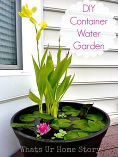 How to Set up Mini Water Gardens on Your Deck DIY Container Water Garden. Recommended plants: canna lilies, dwarf papyrus and taro (for height); water lilies or lotuses (their leaves will cover much of the water surface from sunlight, preventing algae gro Container Water Gardens, Container Gardening, Diy Container Pond, Water Containers, Small Water Gardens, Wooden Containers, Container Flowers, Mini Pond, Water Features In The Garden