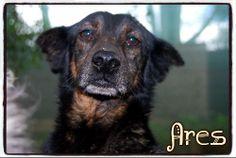 ¡¡ADOPTADO!! Nunca nadie ha preguntado por Ares, un maravilloso #perrito al que le cortaron las orejas como identificación. Está en #adopcion en La Candela, #Spain http://protectoralacandela.org/ares/