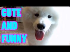 Funny Cats, Dogs and Bunny Rabbits Compilation 2017 -  #animals #animal #pet #cat #cats #cute #pets #animales #tagsforlikes #catlover #funnycats  Learn how to speak cat! Click HERE for the cat bible! Welcome to my channel Sparkle Pets! I hope you enjoy Funny Cats, Dogs and Bunny Rabbits Compilation 2017 . Please let me know what the next type of... - #Cats