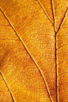 Autumn Leaves No.5 by Daniel Csoka