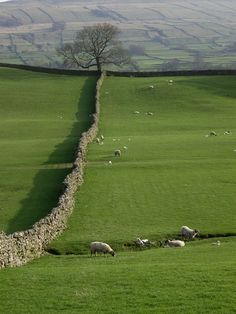 The Yorkshire Dales stretch on for miles! Yorkshire England, Yorkshire Dales, South Yorkshire, England And Scotland, England Uk, Terre Nature, British Countryside, British Isles, Beautiful Landscapes