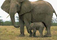 Elephants are awesome