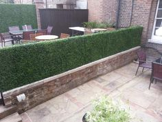 tall boxwood hedges - Google Search