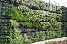 atlanta botanic garden herb wall