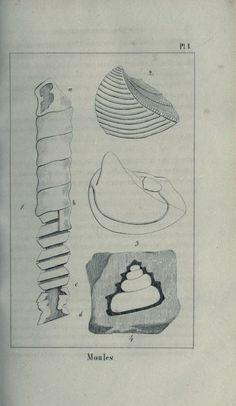1 - Traité élémentaire de paléontologie; - Biodiversity Heritage Library