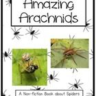 Spiders! Amazing Arachnids Shared Reading Non-Fiction Book This non-fiction book uses real photos to support the detailed information. Many spiders...