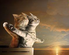 Wallpaper_Titanic_1280x1024.jpg (1280×1024)