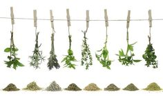 Fresh Herbs to Dry Herbs Convertions Ratios