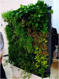 Fabulous wall planters indoor living wall ideas 40 - Your succulent garden is currently finished! Normally, mass-produced pots are somewhat more affordable. Planters are large pots meant for holding plants, brings a distinctive glam to the house decor. Plant Wall Diy, Indoor Plant Wall, Indoor Plants, Air Plants, Herb Garden, Vegetable Garden, Jardin Vertical Artificial, Decoration Plante, Eco Friendly House
